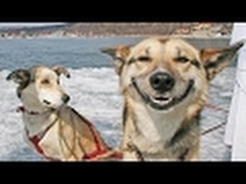 lustige hunde videos zum totlachen versuche nicht zu lachen oder zu grinsen funny dogs. Black Bedroom Furniture Sets. Home Design Ideas